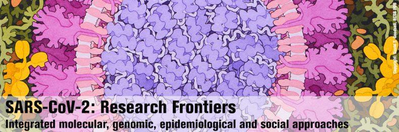 Coronavirus in the lang. Illustration by David S. Goodsell, RCSB PDB
